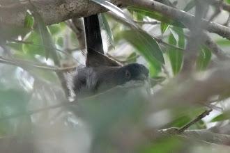 Photo: Sardinian Warbler