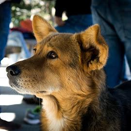 Eyes of Hope by Gaurav Kumar - Animals - Dogs Portraits ( portraitphotography, dogs, dog, portrait, animal )