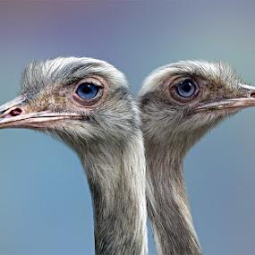 by Catherine McKinty - Animals Birds (  )