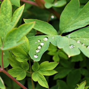 Sym by Marsha Grimm - Nature Up Close Other plants ( beautiful, symmetry, rain,  )
