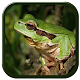 Download Frog Sound For PC Windows and Mac