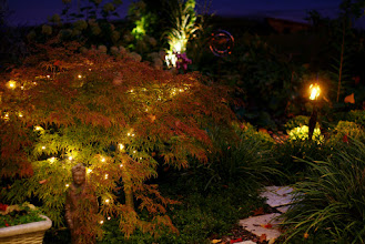 Photo: String lights woven through weeping shrubs them glow from the inside.