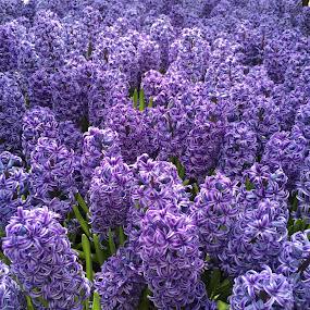 by Melissa Bieri - Flowers Flower Gardens (  )