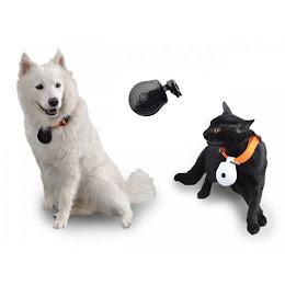 Zgarda cu camera foto-video pentru caini sau pisici