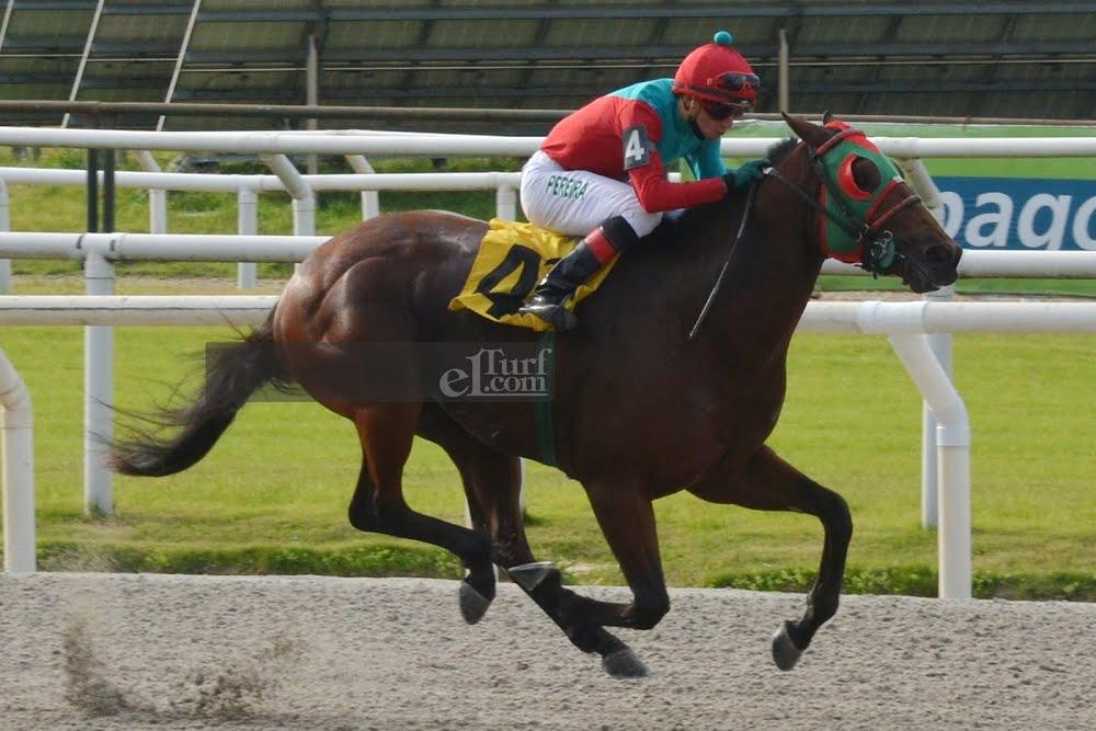 Zabino (A. P. Cardinal) conquistó Condicional (1000m-Arena-MAR). - Staff ElTurf.com