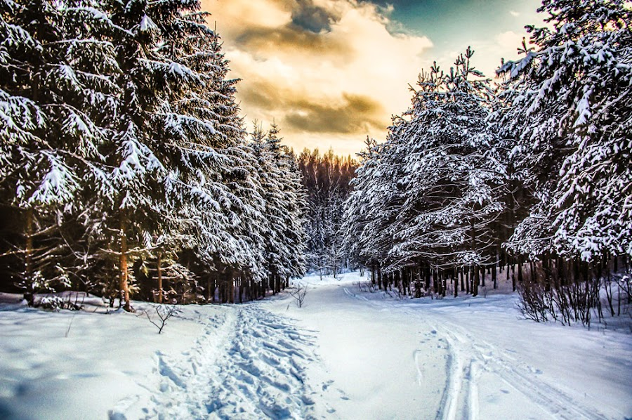 Snowly sunset by Norbert Durko - Landscapes Forests ( clouds, hdr, nature, cold, sunset, snow, trees, trails, sun )