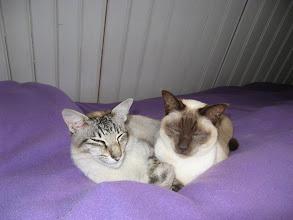Photo: Sinjo & Nala