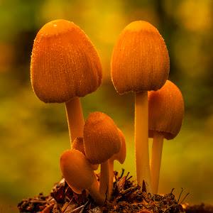 W Åsen svamp 56 DSC05518.jpg