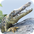 Alligator Simulator: Free Game file APK Free for PC, smart TV Download