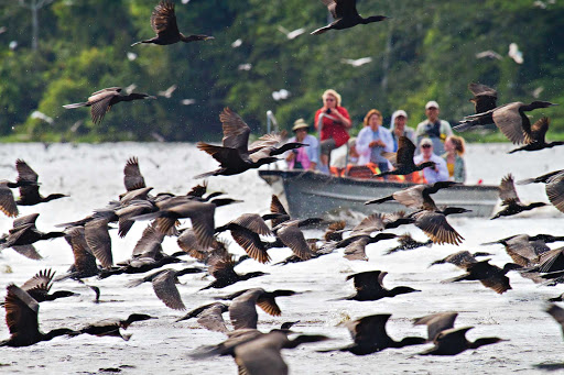 amazon-birds-wildlife.jpg - Birds gather around the ship on a Lindblad Expeditions boat tour of the Amazon River.