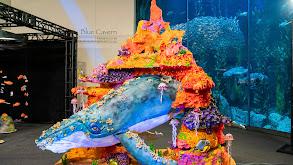 Aquarium Cake thumbnail
