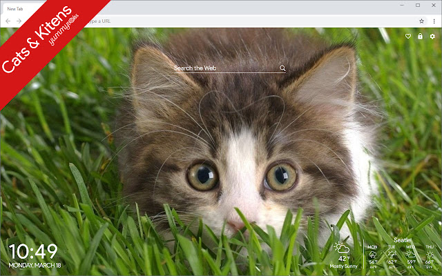 Cute Cats and Kittens Wallpaper new Tab