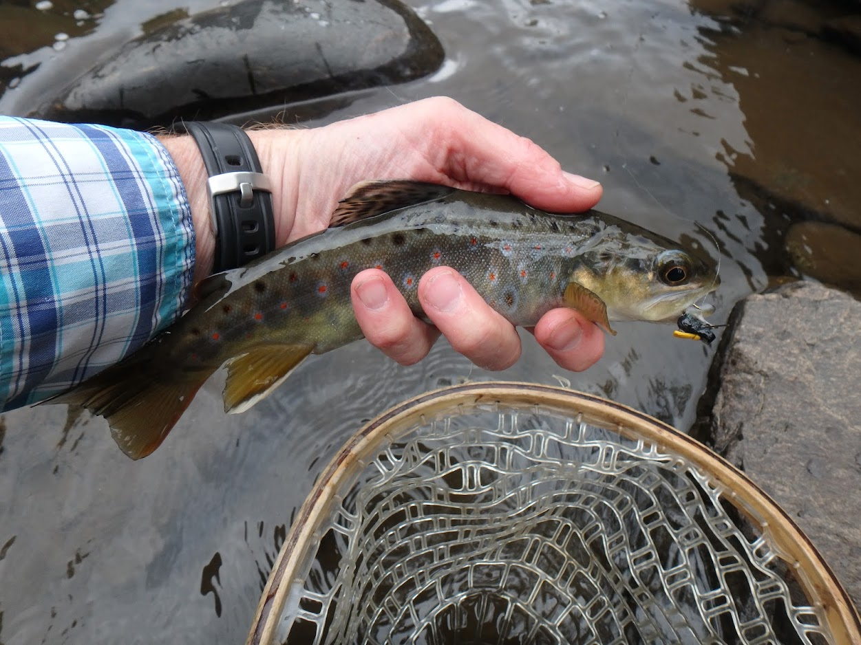 Clear Creek   Dave Weller's Fly Fishing Blog
