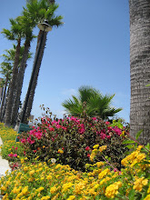 Photo: 海湾岸边的花和树