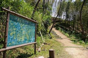 [遊記][桃園]復興鄉 - 綠光森林