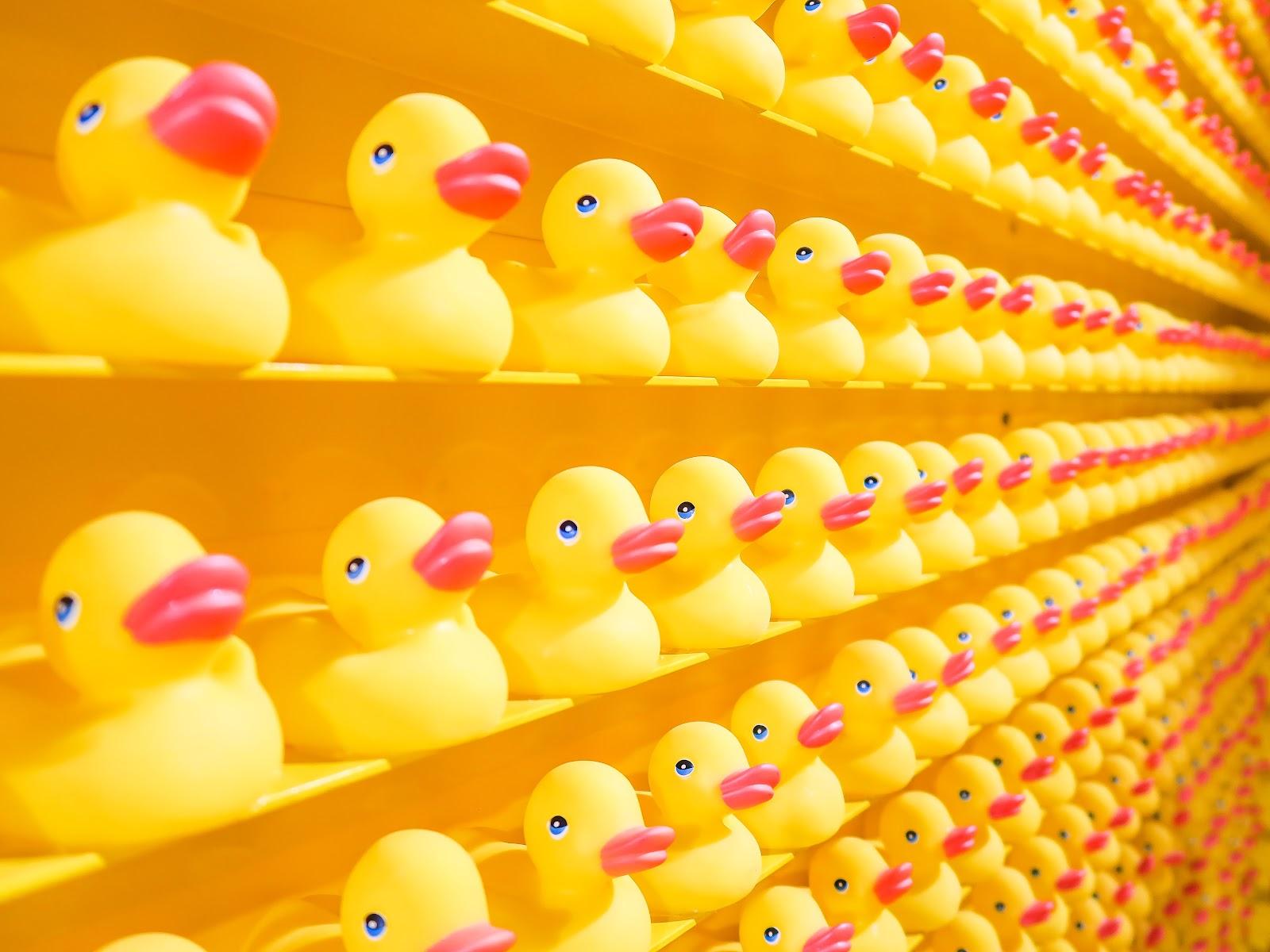 Rubber ducks in a row line a shelf.