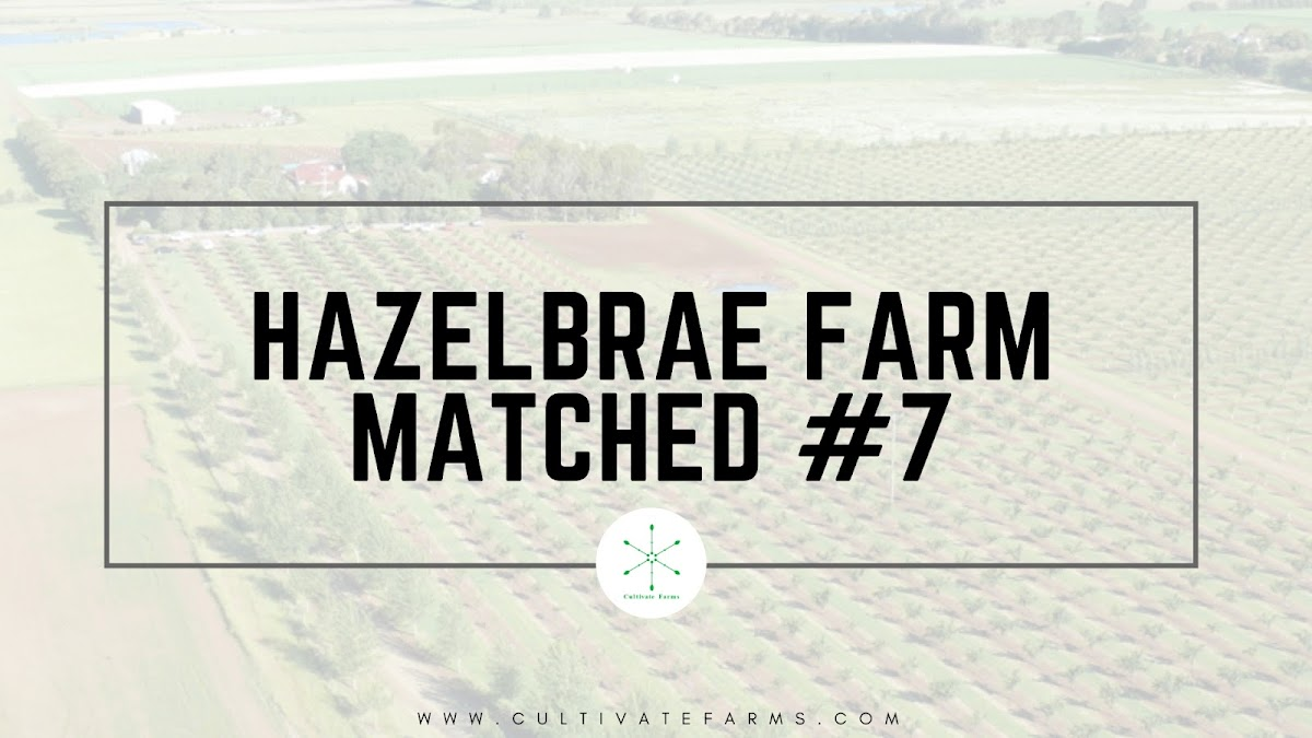 Hazelbrae farm matched #7
