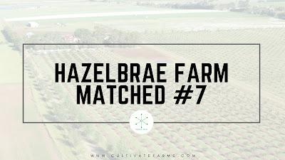 Hazelbrae farm matched #7