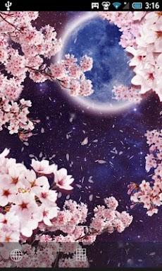 月桜ライブ壁紙のおすすめ画像2