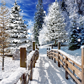 Winter Landscapes Wallpaper APK