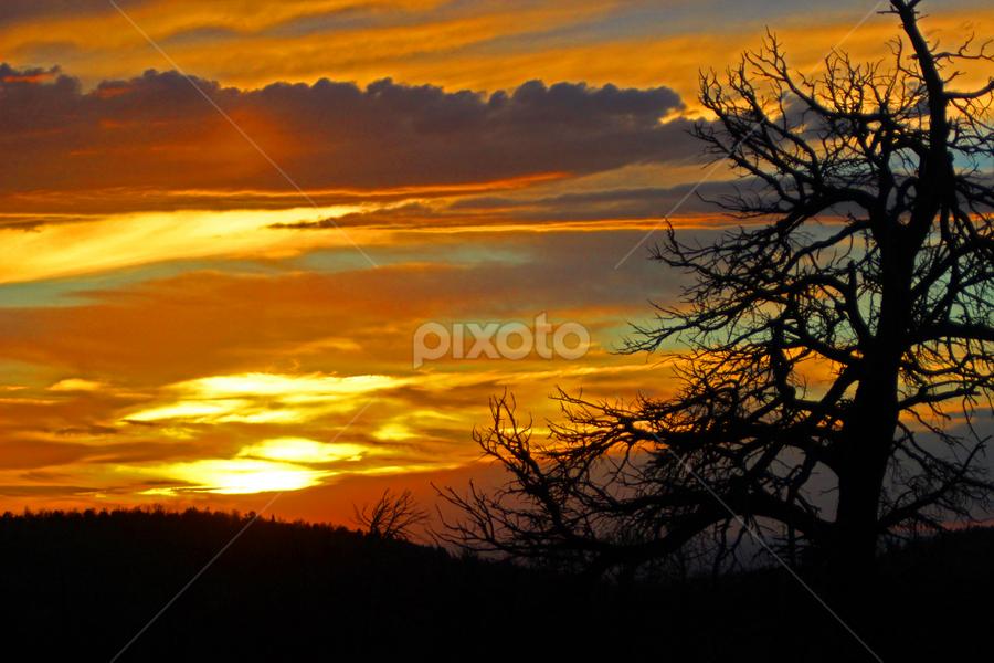Sherman Hill Sunset by Kirby Hornbeck - Landscapes Sunsets & Sunrises ( clouds, red, sky, sunsets, treea )