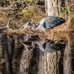 Reverse Image by John Goff - Animals Birds ( chincoteague national wildlife refuge )