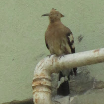 Cairo Wildlife Watch