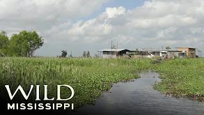 Wild Mississippi thumbnail