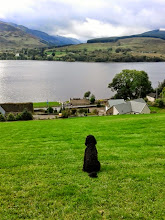 Photo: Oscar the dog admiring the view from Briar Cottages Rear Garden
