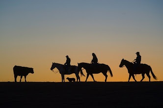 Photo: The Crain family and their herding dog, Wrangler, move cattle at sunset on the Crain's farm near Meade, Kan. Photo by Craig A. Hacker for USA TODAY.