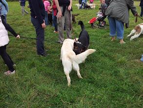 Photo: Jamie Golden and Stanley German Shepherd saying hello... dog style!