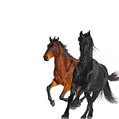 Old Town Road (Remix) (feat. Billy Ray Cyrus)