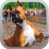 Crazy Dog Race Greyhound 3D