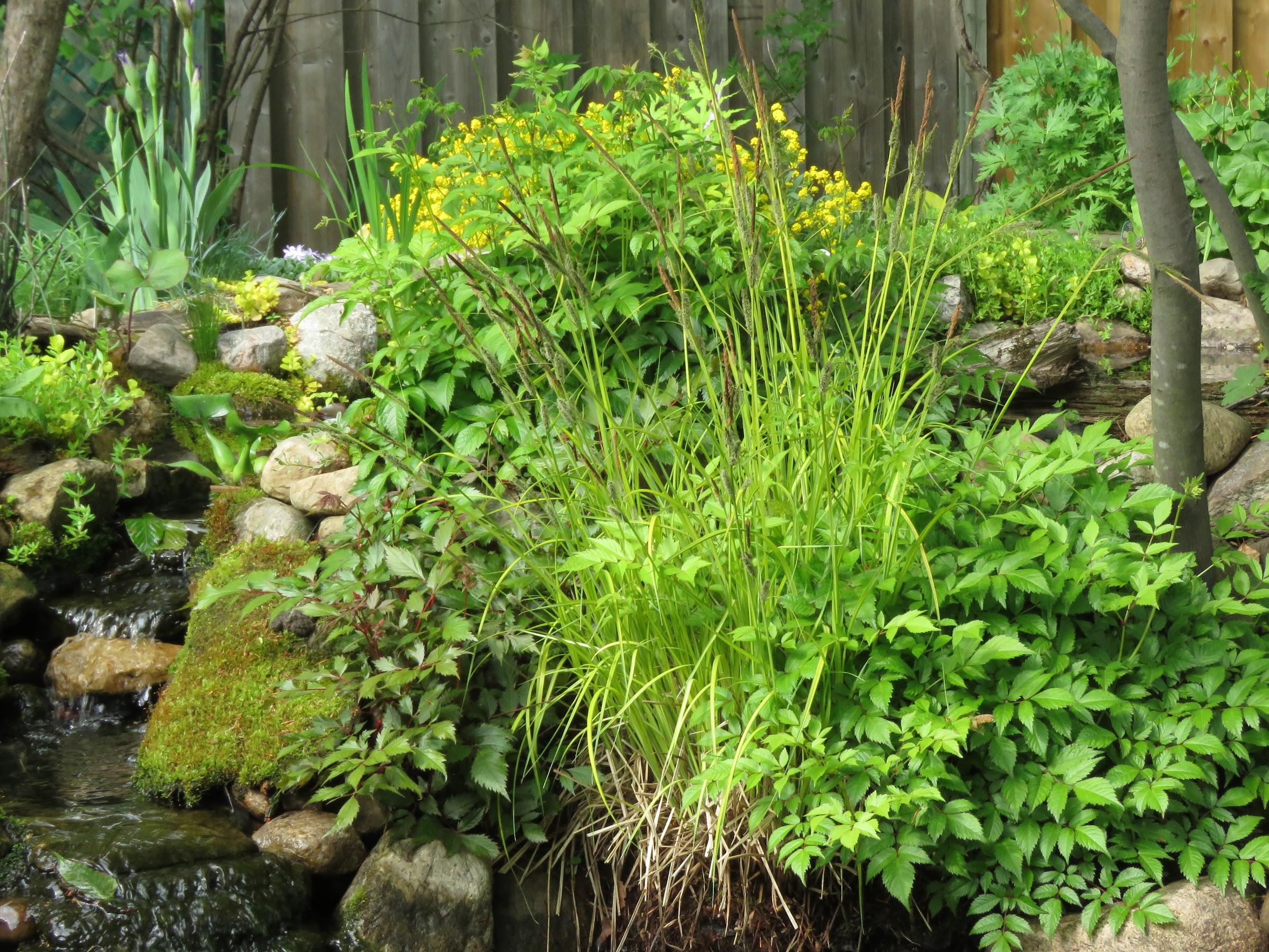 Mini jardin d'eau en contenant Zpr0GgFuQZW6H8-K4RWPZK-xcMYRYnY7oiNtCVxJYj53rtNhVH3KefHhmGbjjyDbQA8mABPpO6g0NZNgDTmkQWksHLUqJ321XFm-h-R3JvZulDkD2R0QBHm2BBK1FuYNaPd76PoMWtg=w2400