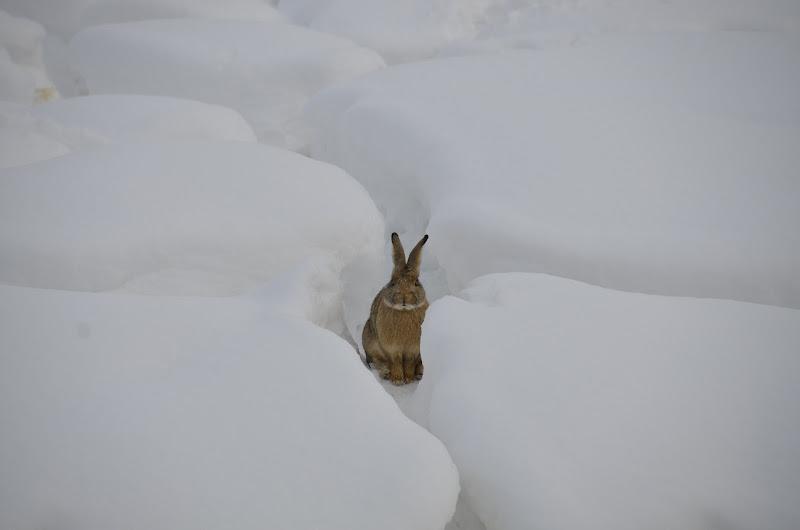 Lost in the Snow di quateo