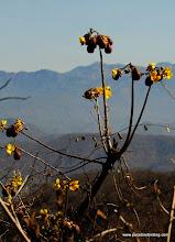 Photo: Flowering tree at El Mirador del Aguila