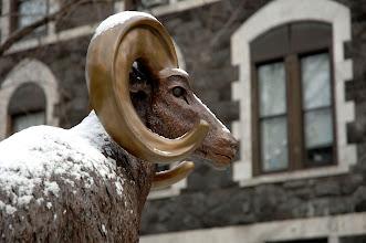 Photo: The Ram Statue