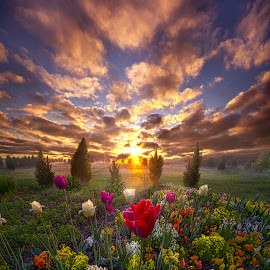 The Light That Shines Our Way Home by Phil Koch - Flowers Flower Gardens ( trending, country, shadow, rural, office, scenic, hope, canon, spring, red, beautiful, pastel, weather, season, sky, flowers, emotions, journey, natural, inspired, heaven, morning, field, light, peace, shadows, dawn, photography, love, sunrise, mood, vertical, endless, clouds, fineart, sun, life, colors, unity, joy, lines, popular, arts, meadow, wisconsin, art, living, green, nature, inspirational, dramatic, portrait, horizons, horizon, environment, outdoors, blue, sunset, earth, travel, serene, landscape,  )