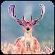 Deer Wallpaper HD Download for PC Windows 10/8/7