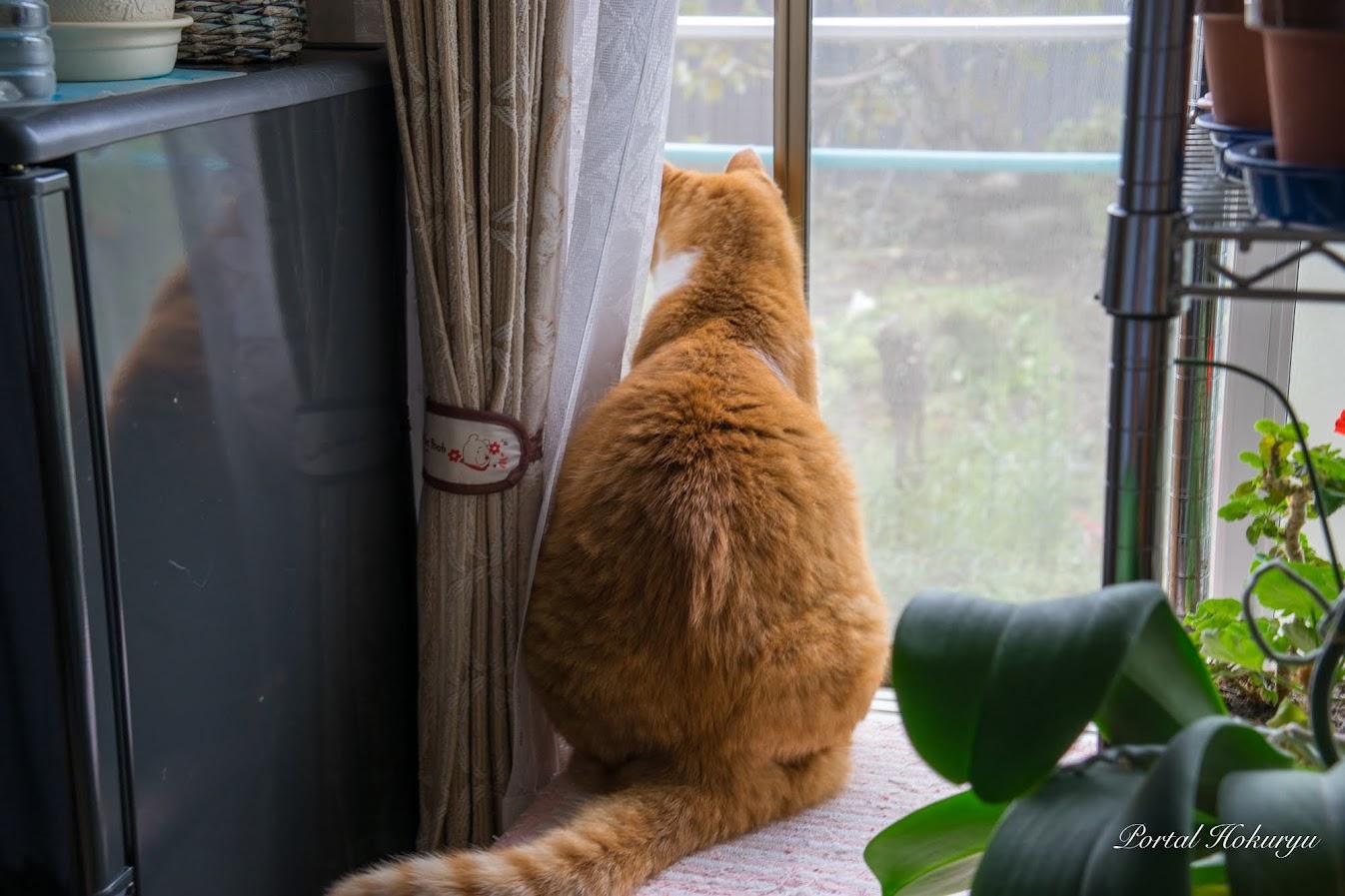 外を眺めるマロちゃん