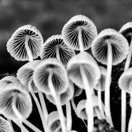 Shrooms... by Anoop Namboothiri - Black & White Macro (  )