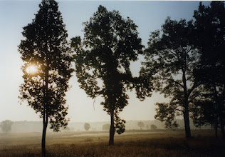 Photo: As the sun rises in Kanha  Wildlife Park in central India
