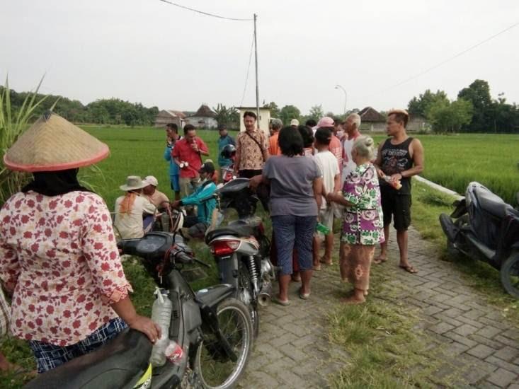 Hama tanaman padi BLAS