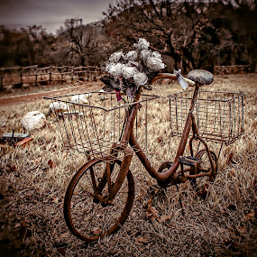 Rusty by Andre Oelofse - Transportation Bicycles (  )