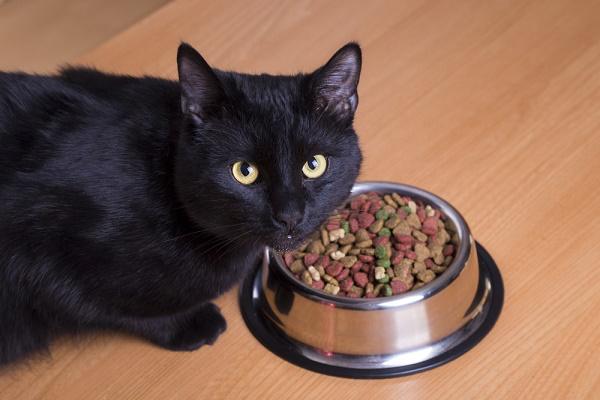 #Hướng Dẫn 9+ Cách Làm Pate Cho Mèo Ngay Tại Nhà
