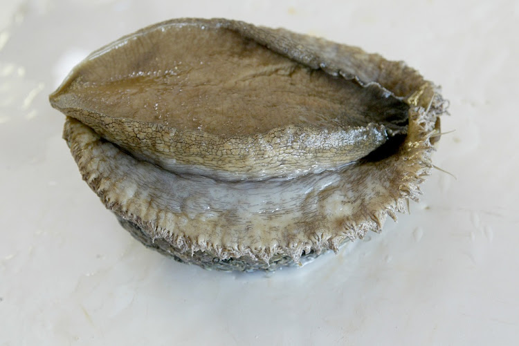Abalone (aka Perlemoen) is one of the most highly-prized contraband of all.