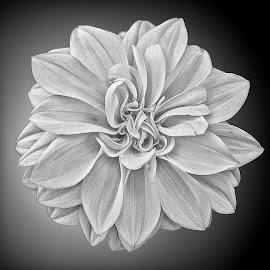 B&W flower 45 by Michael Moore - Black & White Flowers & Plants