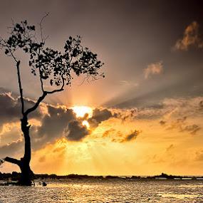poon by Aep Saepudiah - Landscapes Sunsets & Sunrises ( trees, sunrise, landscape, pwcsunbeams, sun )