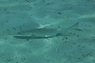 Photo: Mad River Outfitters serves as a full booking agent for the Andros Island Bonefish Club