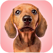 Talking Dogs Android APK Download Free By Talking Pet